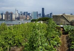 Rooftop Farms, Brooklyn